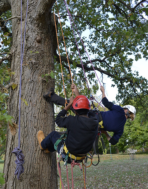 Arborists hanging in a tree