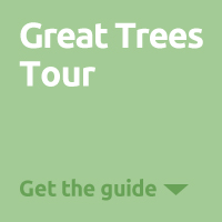 Great Trees Tour