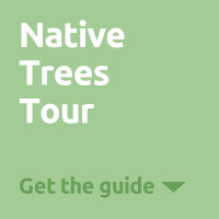 Native Trees Tour