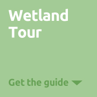 Wetlands Tour