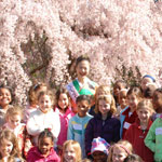Thumbail Image - Cherry Blossom Festival - Queen