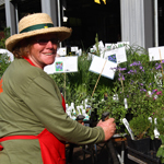 Thumbail Image - Plant Sale - Perusing Plants